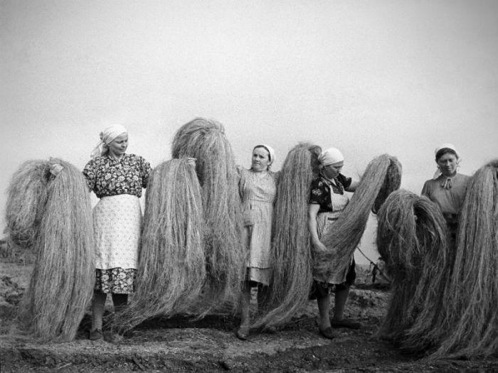 История выращивания конопли в Советском Союзе