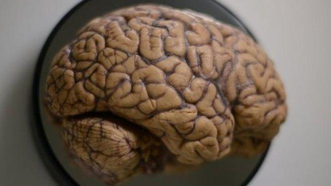 Ученые пересмотрели прежние представления о работе памяти