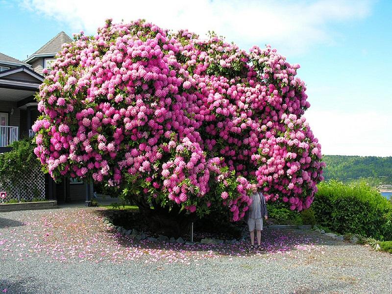 10 самых красивых кустарников для сада!