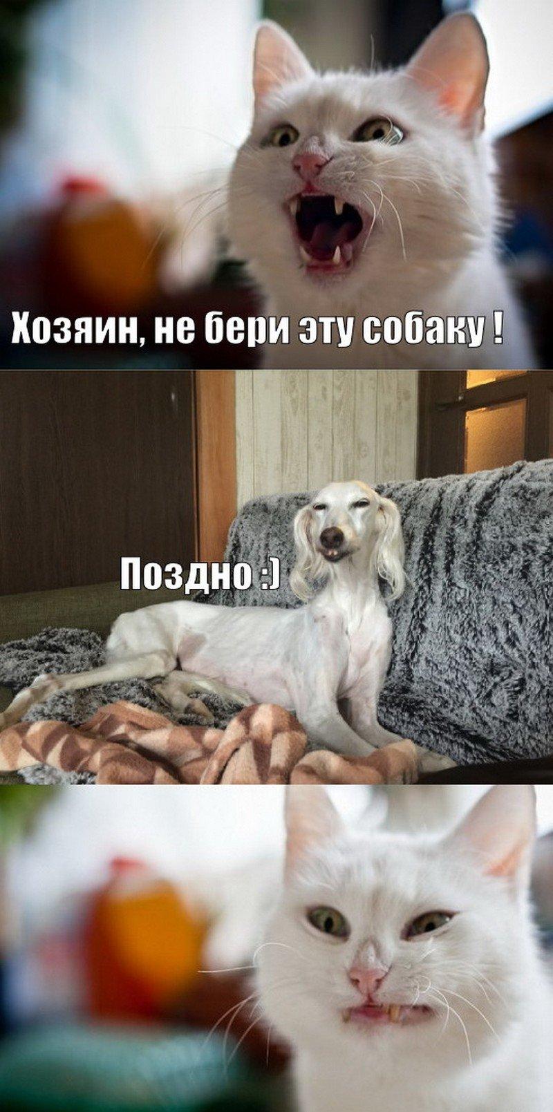Всем добра)) веселые картинки,приколы,юмор
