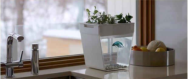 3 новых способа украсить интерьер с помощью растений