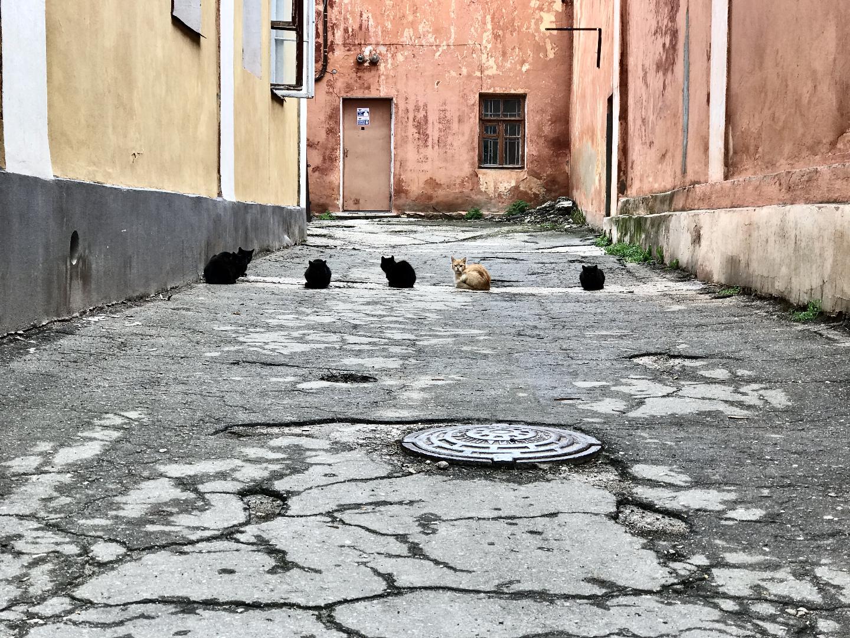БОЛЬ, СТРАДАНИЯ, ГОРЫ, КРЫМ // Велопутешествие по Крыму // Часть 3 только, дальше, чтобы, немного, добрались, хотелось, Коктебеля, велосипеды, сторону, много, когда, дождь, Феодосии, конечно, собой, Хамелеон, конце, здесь, через, видели
