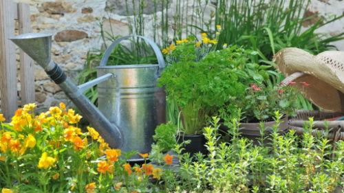 Огородные хитрости – если ехать на дачу, то с удовольствием!
