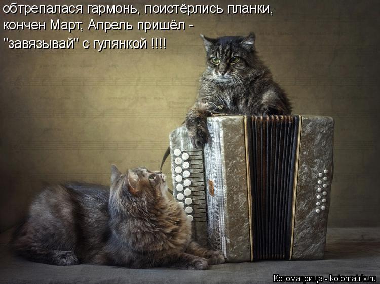 Котодром - 31 от Михалыча