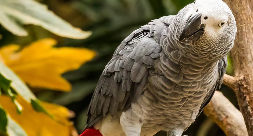 Попугай жако — самый умный «…