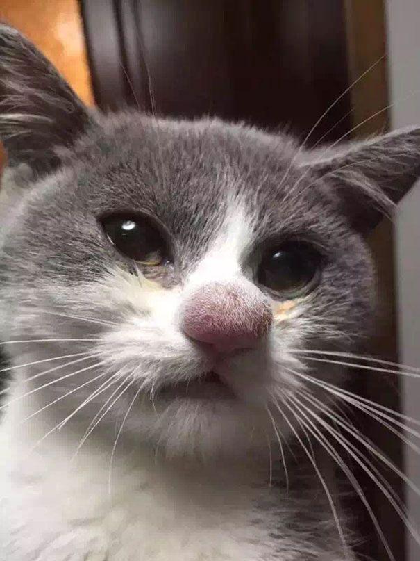 19 ужаленных кошек, проигравших битву с пчелами