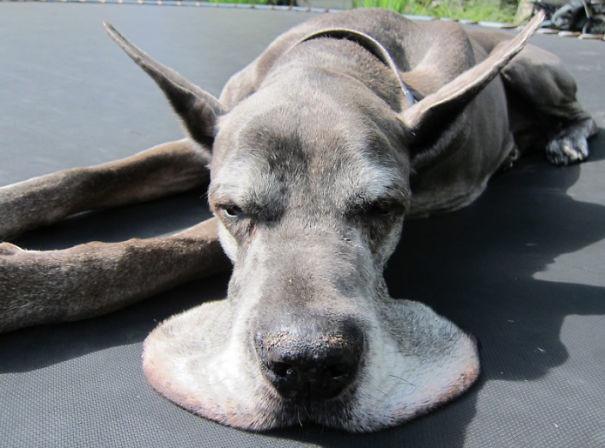 Наконец-то и псу можно расслабиться! животные, расслабленность, смешно, фото
