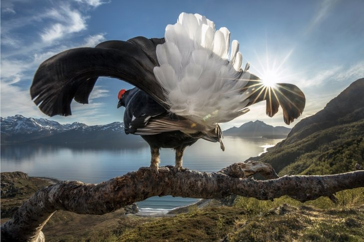 Победители конкурса фотографии BigPicture Natural World-2019