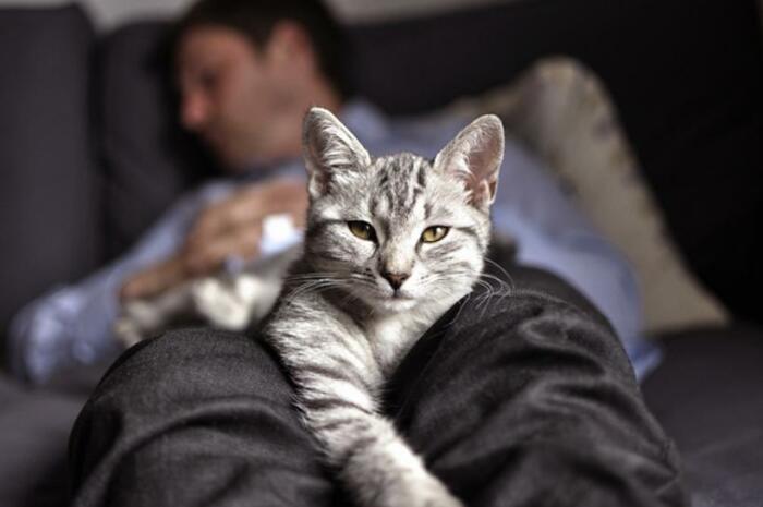 Почему многие коты предпочитают спать, умостившись на человека сверху домашние животные,кошки и коты,общество,человек