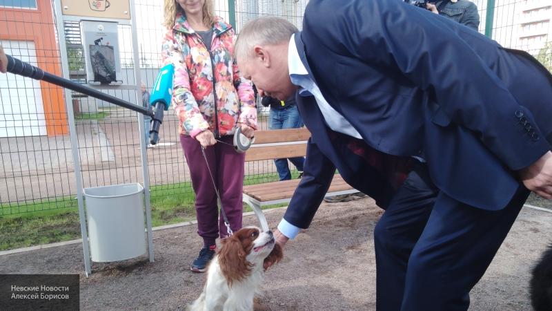Жители Приморского района выразили благодарность Беглову за площадку для выгула собак