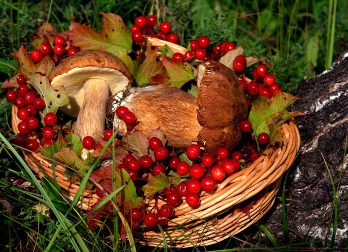 Сокровища осеннего леса. Фотографии грибов