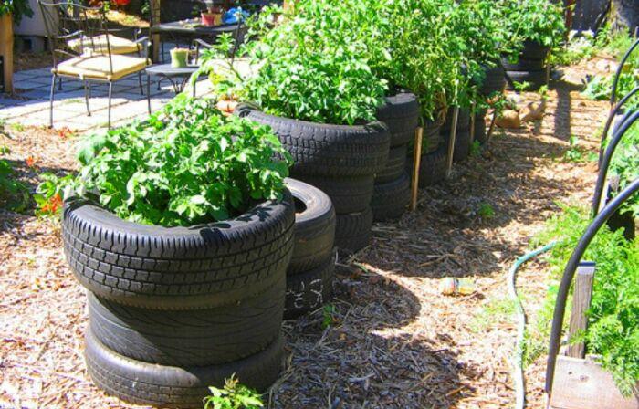 Как правильно вырастить картофель в покрышках: и аккуратно, и места мало занимает дача,лайфхак,полезные советы,сад и огород