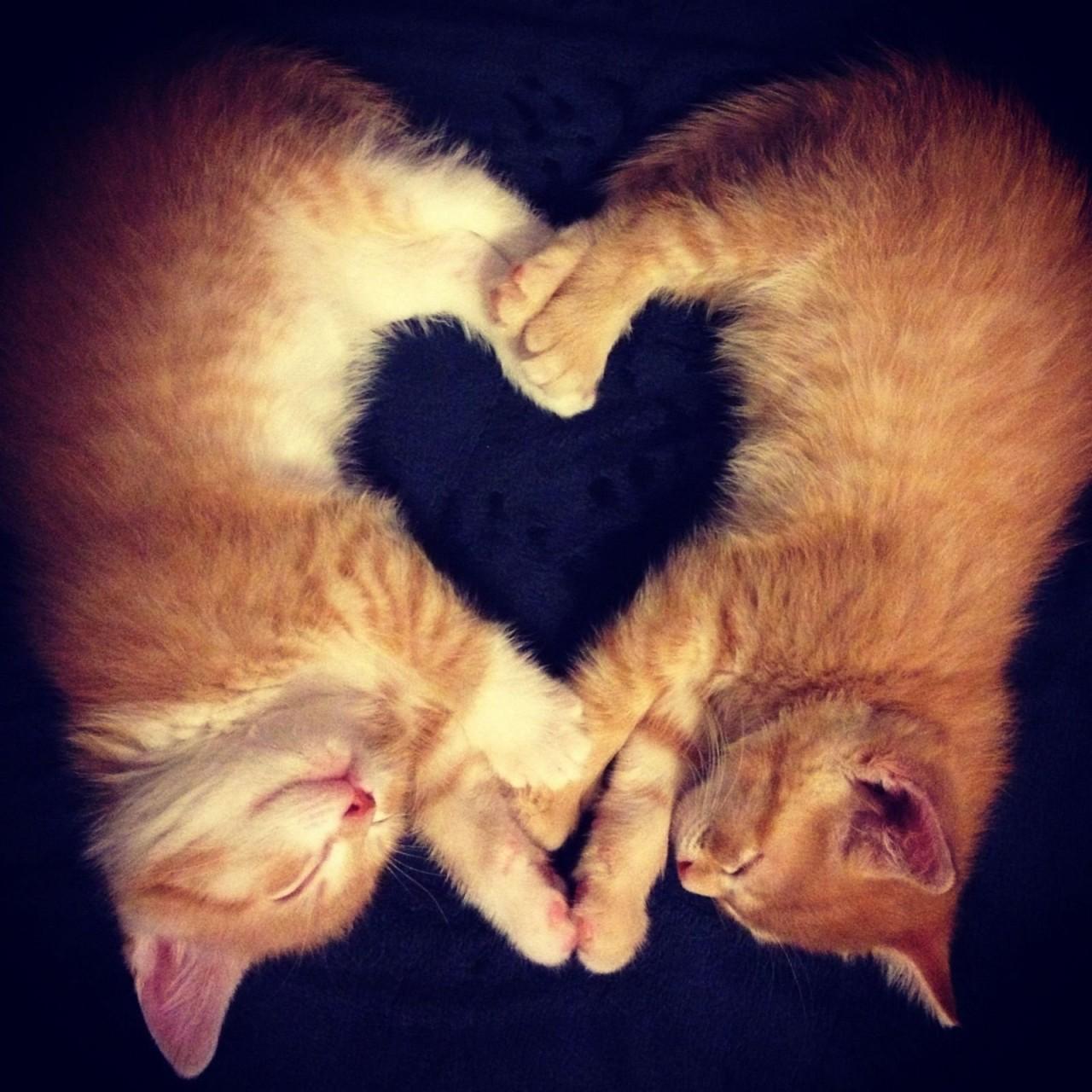 Открытки, открытка любовь животных