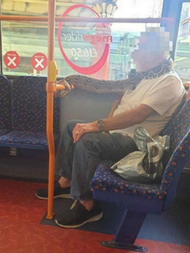 Англичанин решил проверить наблюдательность людей и вместо маски в автобус взял своего домашнего питона Культура