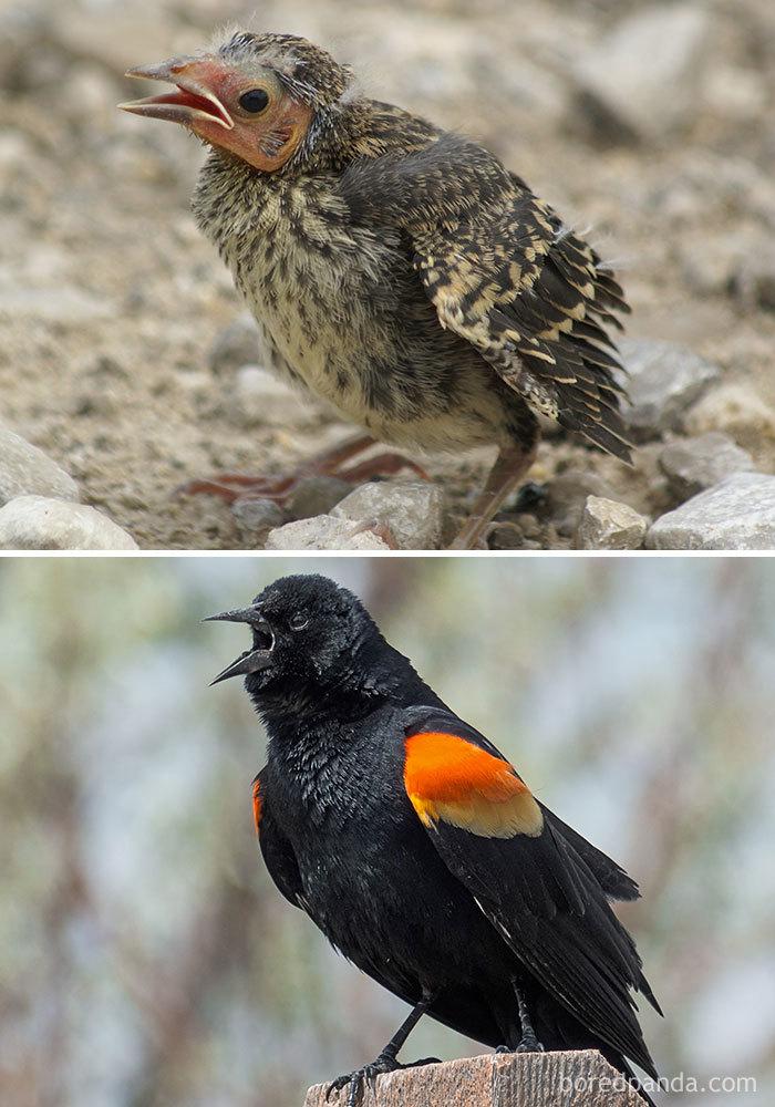 как определить птенца птицы фото радуюсь, одной