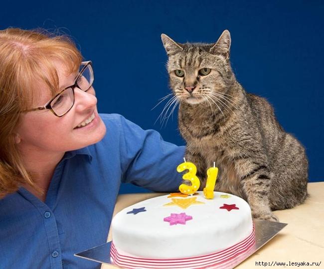 День рождения самого старого в мире кота! Кошачьи истории — обхохочешься)))