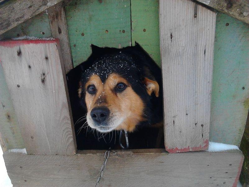 Радикулит, картинка собаки с надписью теперь перезимуем а теплых будках