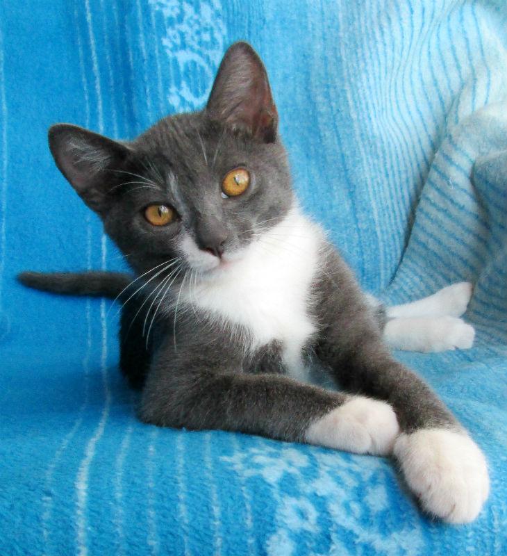 Котеночек Тиша срочно ищет дом