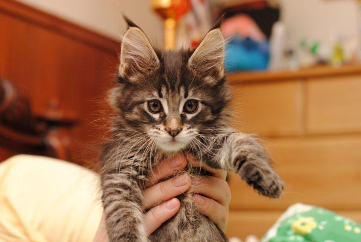 Принесла домой котика, реакция папы заставила раскрыть рты от удивления