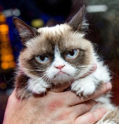 Сердитый котик выиграл суд
