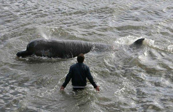 Случайный прохожий в Сочи спас дельфина, который заплыл в реку