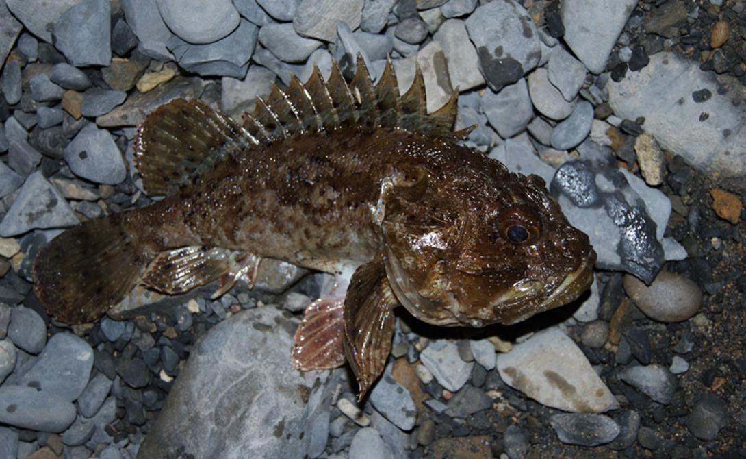 Самые опасные создания морских глубин