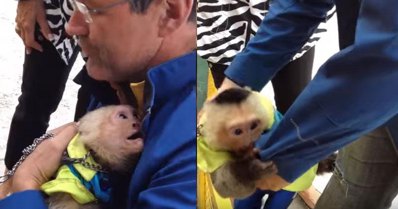 Цирковая обезьяна не видела …