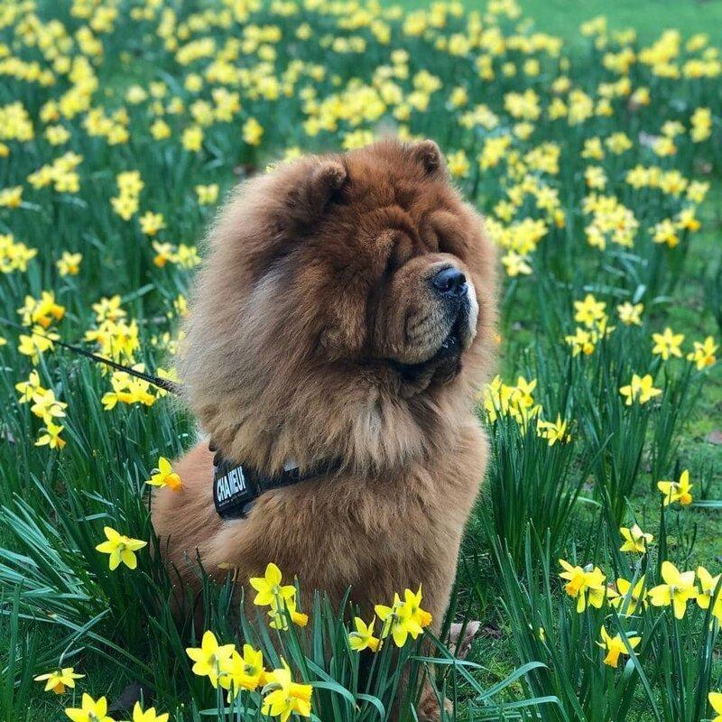 Не только же хозяйке делать фотографии с цветочками домашний питомец, животные, милота, подборка, собака, фото
