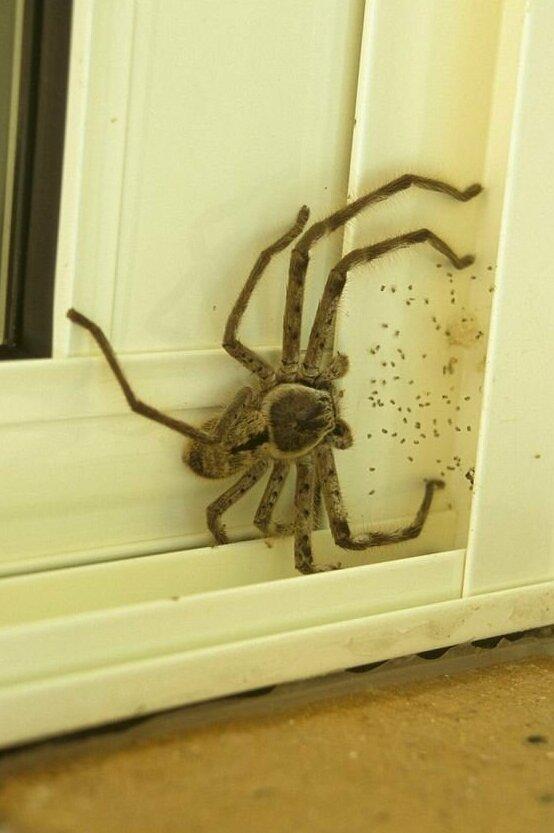 Маленький друг, поселившийся на вашей двери бывает же такое, животные, интересное, природа, растения, ужасы