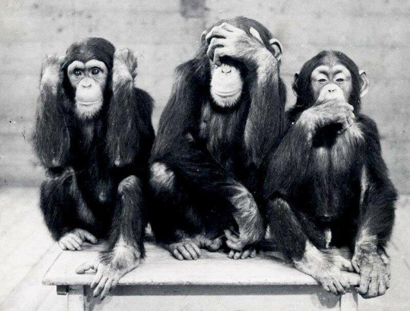 """""""Ничего не слышу,ничего не вижу,ничего не скажу""""! Зоопарк Хагенбека (Гамбург, Германия) 1954 год история, ретро, фото"""