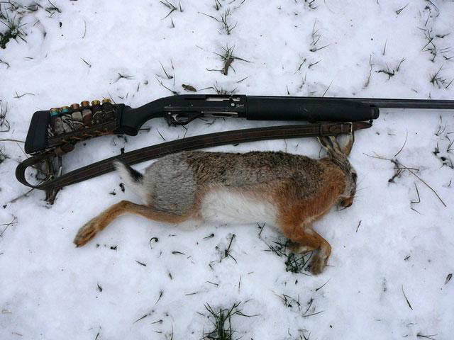Как охотиться на зайца с подхода без собаки