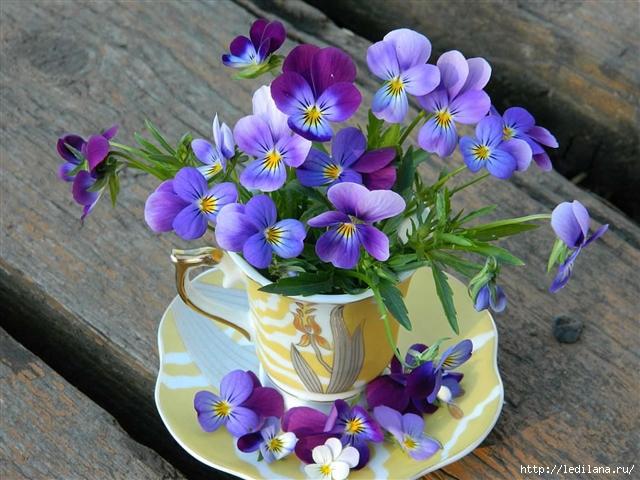 Цветы-остатки рая на земле!