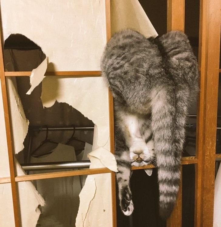 18 фото котиков, которых человеческие папарацци застали в самый неподходящий момент