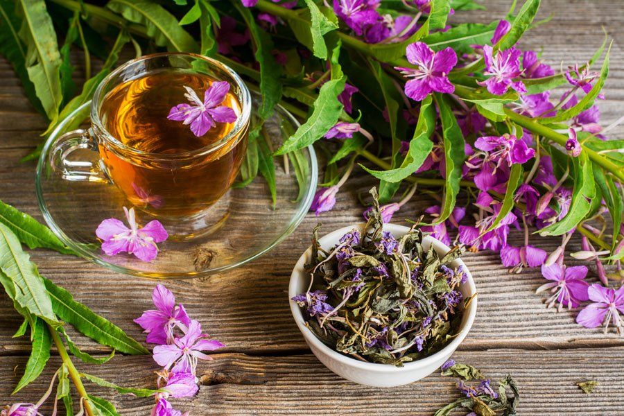 Иван-чай (копорский чай). Все о чае: свойства, приготовление, показания, противопоказания