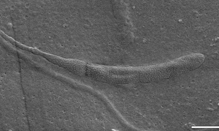 В Антарктиде был найден самый древний сперматозоид Антарктика, антарктида, интересно, ледяной континент, познавательно, секреты Антарктики, удивительно, факты