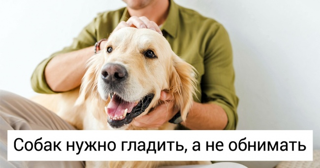 14вещей, которые помогут понять, что собака может укусить (Расскажите оних своему ребенку)
