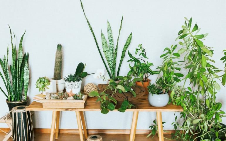 Польза комнатных растений преувеличена