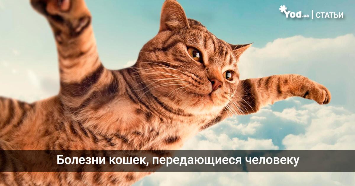 Картинки по запросу Болезни кошек, передающиеся человеку