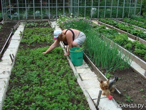 огород сажаем своими руками