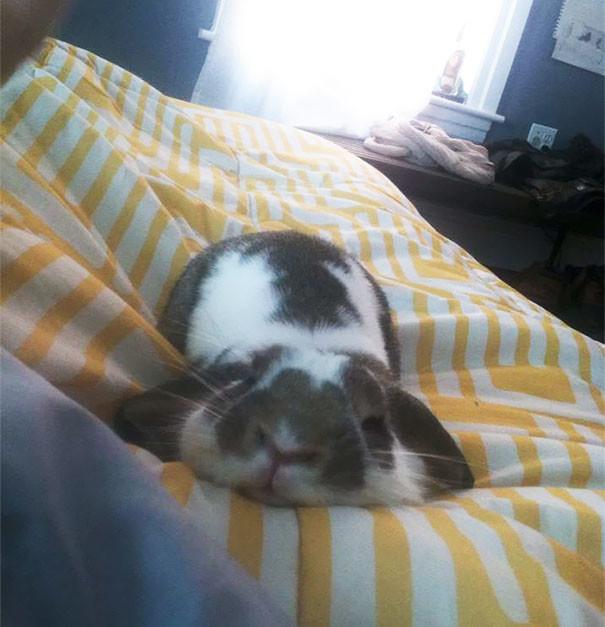 Запомните, расслабляющие позы лучше всего принимать на диване! животные, расслабленность, смешно, фото