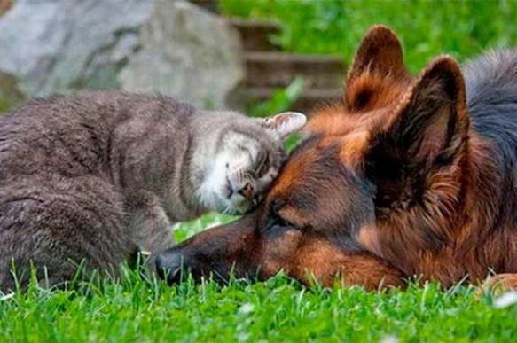 Как кошка с собакой: животные должны жить дружно!