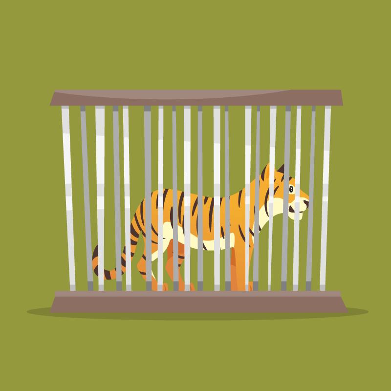 Тигриный рык