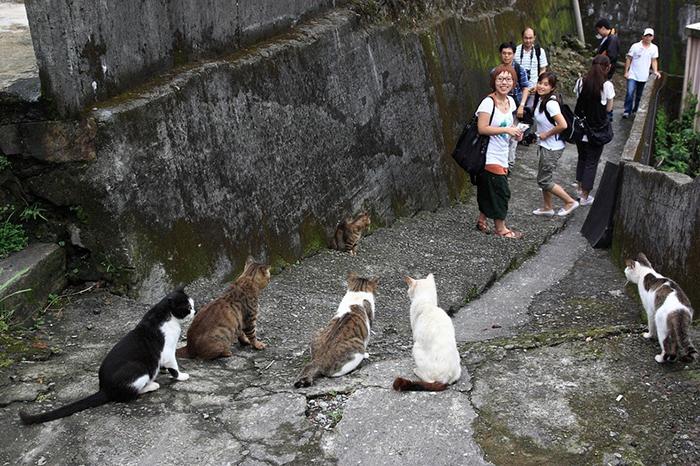 Кошки Хоутонга.