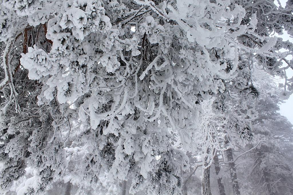Мороз -38.