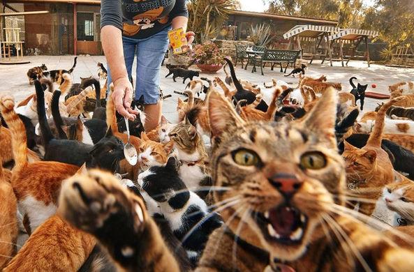 Коты оккупировали портовый г…