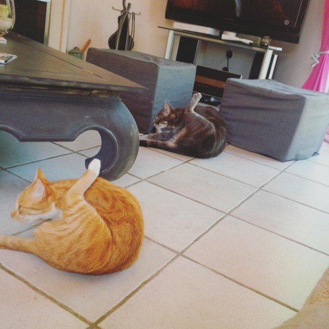 Кошачья фотободборка. Умилительно!