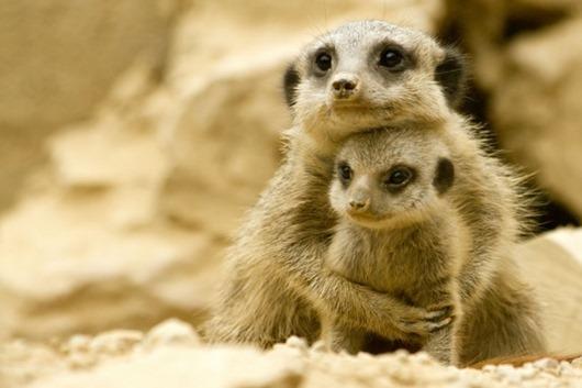 Материнский инстинкт у животных