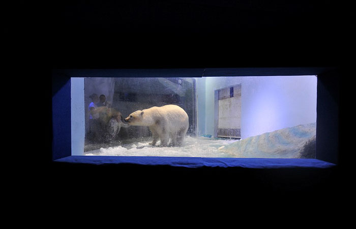 Медведь в зоопарке торгового центра.