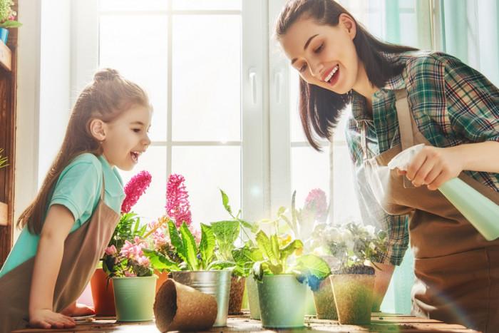 Комнатные растения, которые принесут в твой дом счастье и удачу
