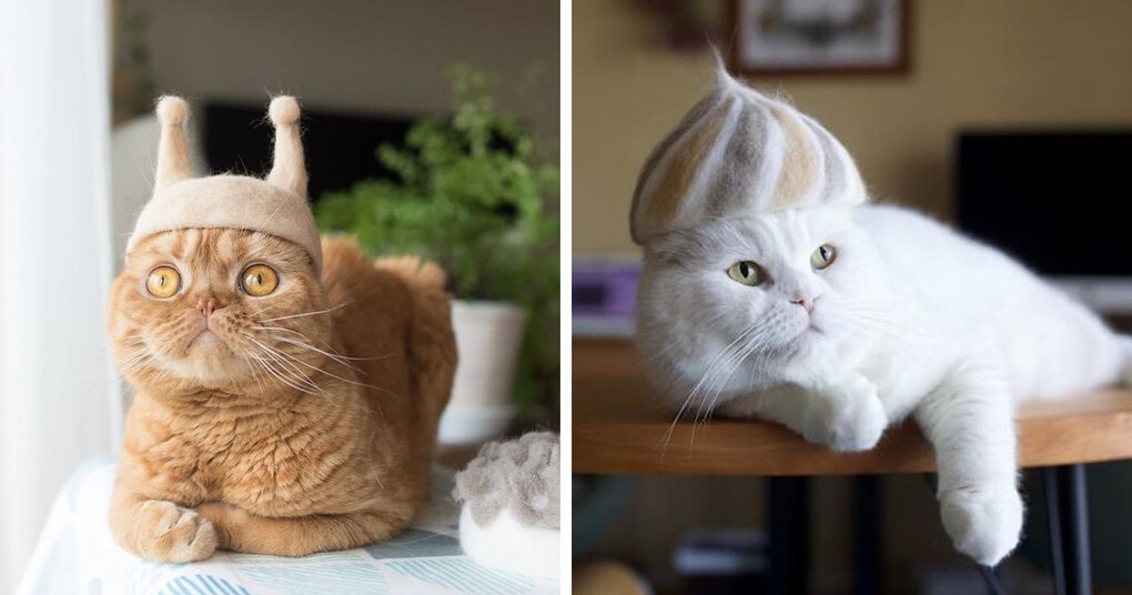 Японский художник создает шляпы для кошек, сделанные из их собственных волос